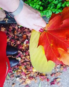 The colors of fall in Cleveland Park are healing